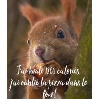 """Carte Humour Ecureuil J'ai brûlé 1200 calories, j'ai oublié la pizza dans le four!"""""""