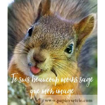 """Carte Humour Ecureuil """"Je suis beaucoup moins sage que mon image"""""""