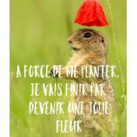 """Carte Humour Marmotte """"A force de me planter, je vais finir par devenir une jolie fleur"""""""