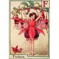 """Carte """"Fées des Fleurs"""" Cicely Mary Barker """"Fuschia"""""""