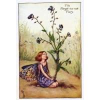 "Carte ""Fées des Fleurs"" Cicely Mary Barker ""Myosotis"""