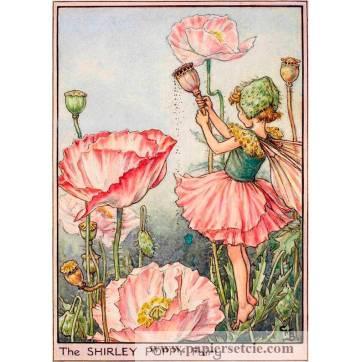 "Carte ""Fées des Fleurs"" Cicely Mary Barker ""Pavot rose"""