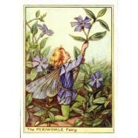 """Carte """"Fées des Fleurs"""" Cicely Mary Barker """"Les Pervenches"""""""