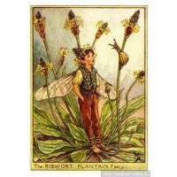 """Carte """"Fées des Fleurs"""" Cicely Mary Barker """"Le Plantain"""""""