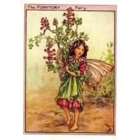 "Carte ""Fées des Fleurs"" Cicely Mary Barker ""Fumeterre"""