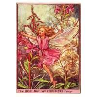 """Carte """"Fées des Fleurs"""" Cicely Mary Barker """"Epilobe"""""""