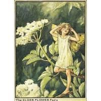 """Carte """"Fées des Fleurs"""" Cicely Mary Barker """"Sureau"""""""
