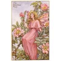 "Carte ""Fées des Fleurs"" Cicely Mary Barker ""Eglantine"""