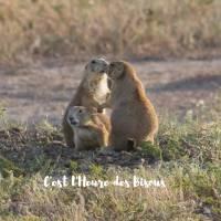 """Carte """"C'est l'heure des Bisous"""" Marmottes"""