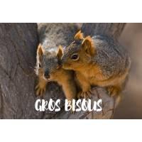 """Carte """" Gros Bisous"""" Deux Ecureuils"""