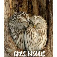 """Carte """" Gros Bisous"""" Couple de chouettes"""