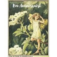Carte Anniversaire Fées des Fleurs Fleurs de Sureau