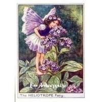 Carte Anniversaire Fées des Fleurs Héliotrope