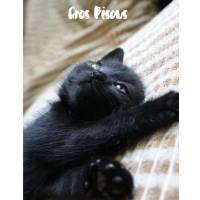 """Carte """"Gros Bisous"""" Adorable Chaton noir"""