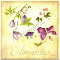 Carte Vincent Perriol Clematites