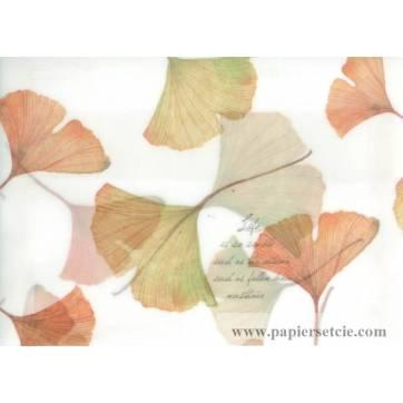 Enveloppe cadeau papier calque imprimé feuilles de Ginseng