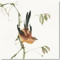 Carte vintage aquarelle Chris Paschke Oiseau brun