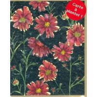 Carte à planter Hannah Marchant Asters rouges Fleurs des champs