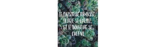 Citations Bonheur